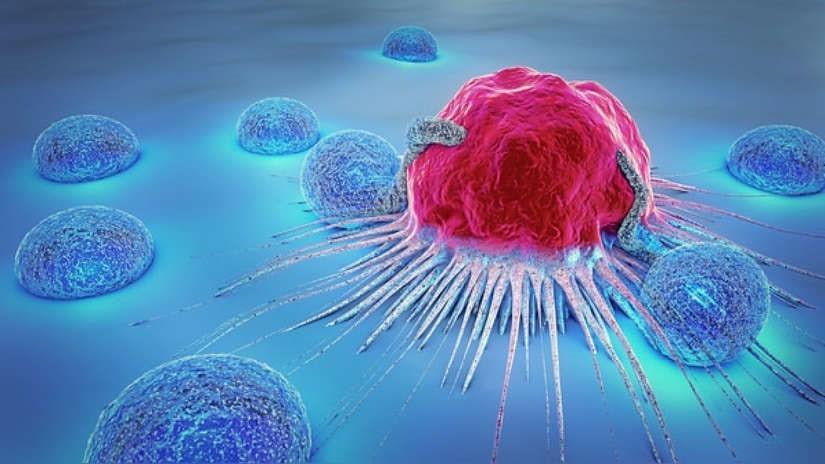 Nueva nanoinmunoterapia para alcanzar la tolerancia en los trasplantes