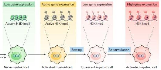 Reprogramación epigenética en la nanoinmunoterapia