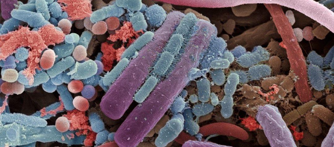 La importancia de detectar las especies bacterianas en un ensayo de microbiota intestinal