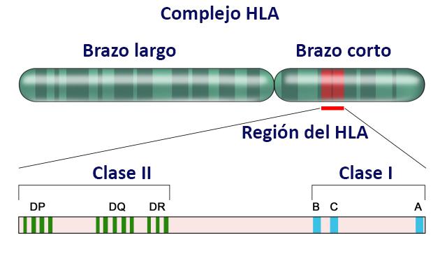 antígeno HLA-B27