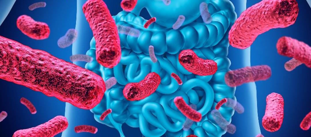 Microbiota y sus funciones