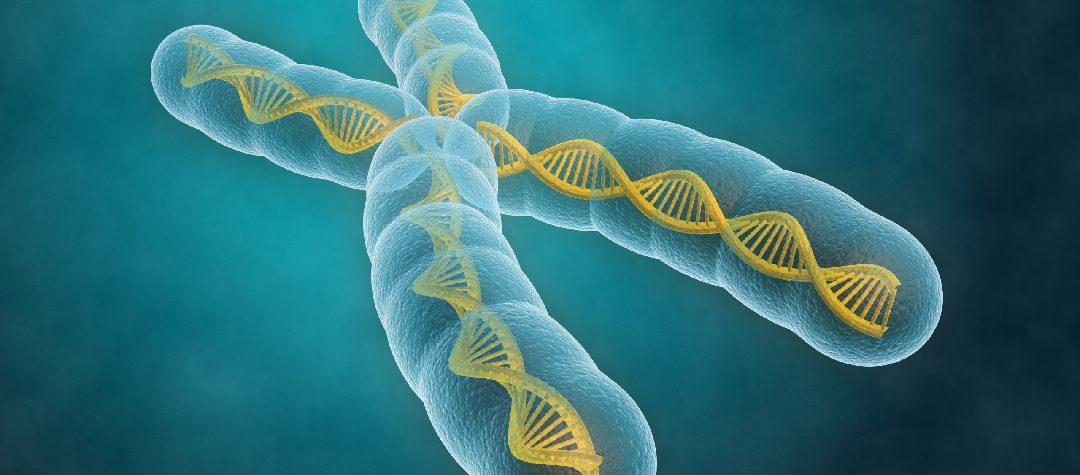 El papel de las interrupciones AGG en la expansión de tripletes asociada a X frágil