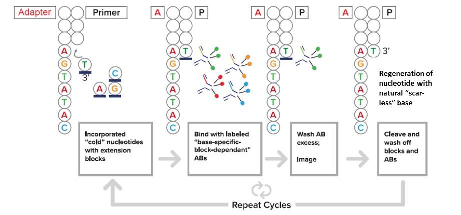 Ciclo Secuenciación CoolMPS™