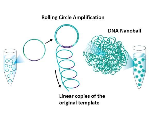 Generación de DNB (nanobolas de ADN)