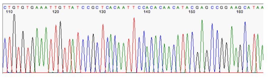 Cromatograma Secuenciacion genomas Sanger