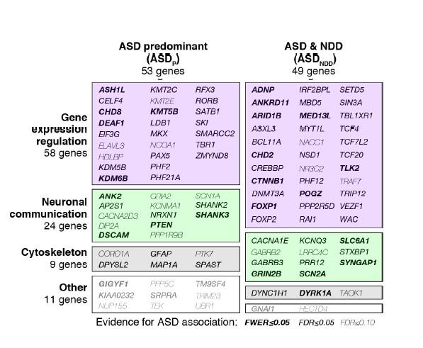 Genes asociados con riesgo de autismo clasificados por su función y su asociación con TEA