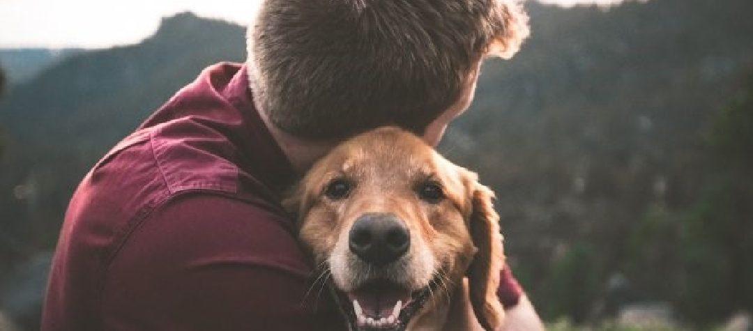 El mejor amigo del hombre: los perros podrían detectar el cáncer con precisión