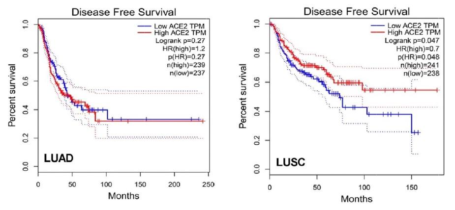 Supervivencia libre de enfermedad en LUAD y LUSC donde se observa una evolucion clinica más favorable en los tumores con sobreexpresion de ACE2 en LUSC