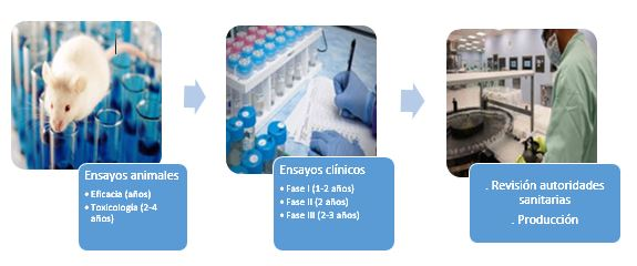 fases para el desarrollo de las vacunas