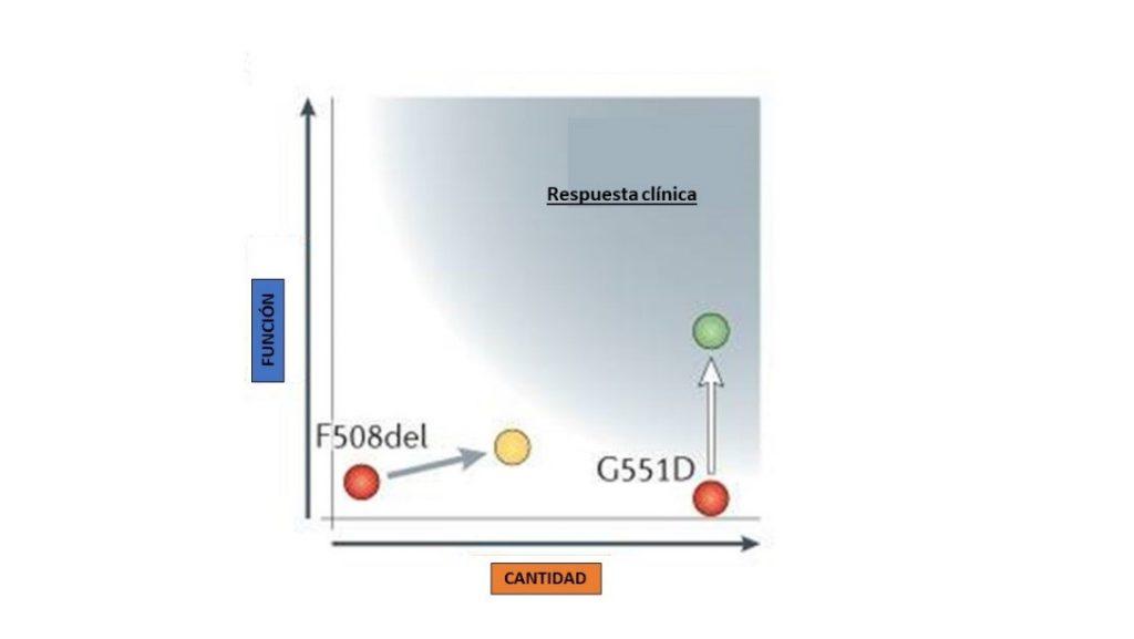 Efectos sobre la función y cantidad de ivacaftor (G551D) y lumacaftor en F508del. El efecto sobre la función con lumacaftor no alcanzaba la respuesta clínica (área azulada)