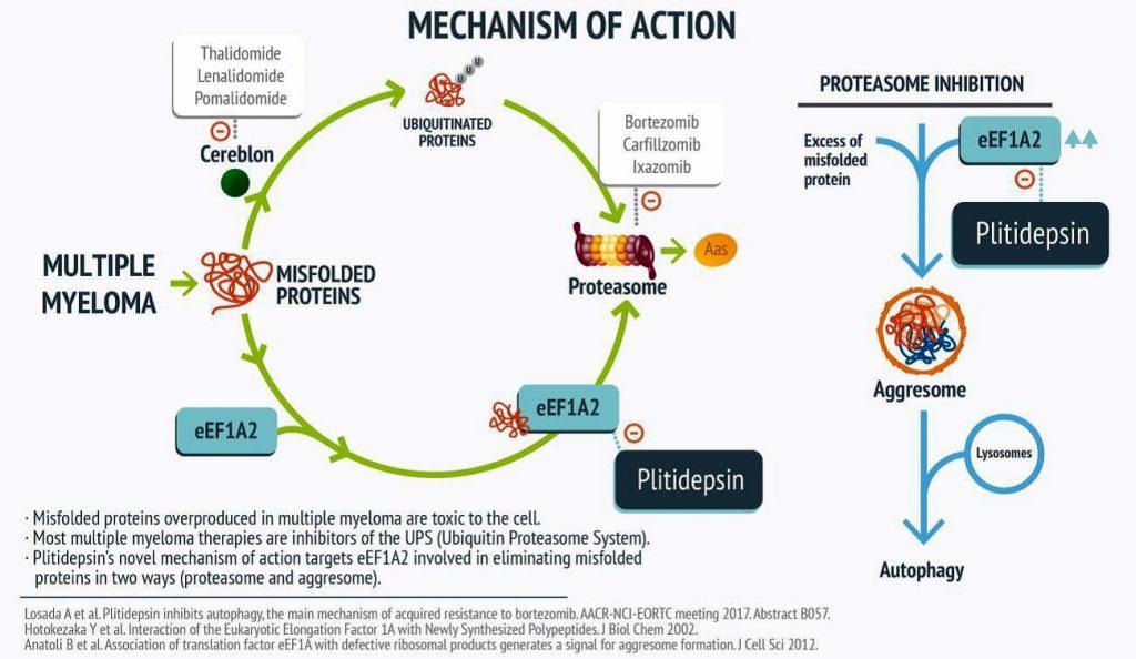 mecanismo de acción de la plitidepsina