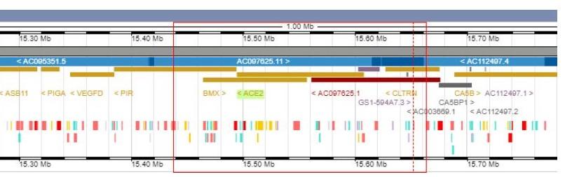 Representación del gen ACE2 (EMBL)