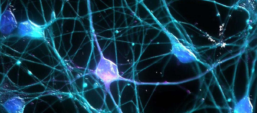 Moduladores genéticos en la Atrofia Muscular Espinal