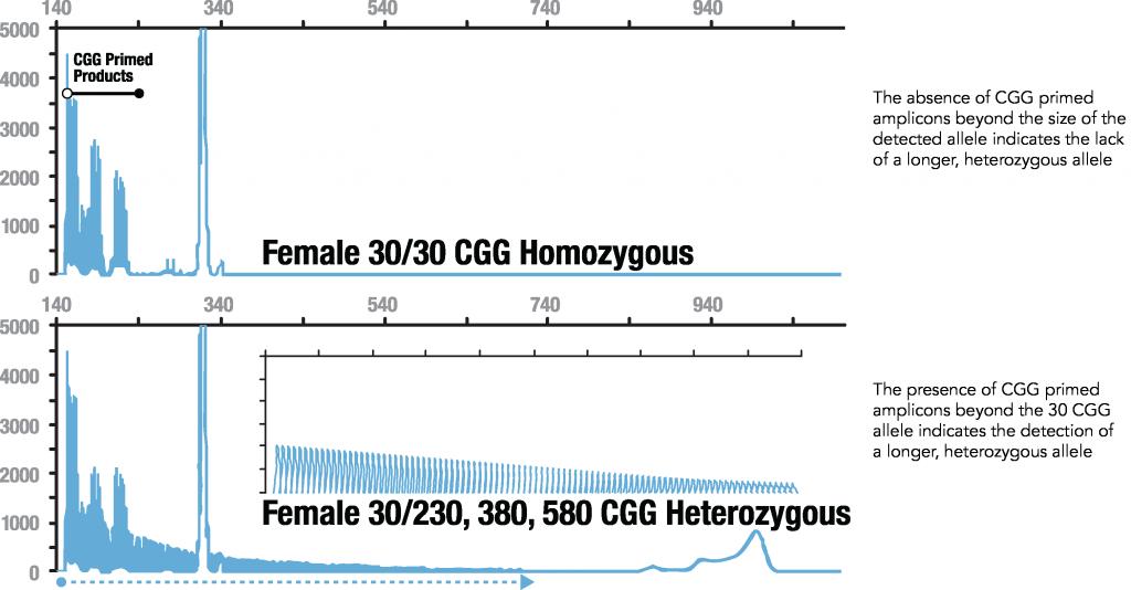 Diferencia clara en los patrones de mujer homocigota y heterocigota