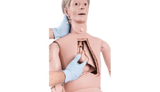 Modelo anatómico de muñeco práctica de cuidados