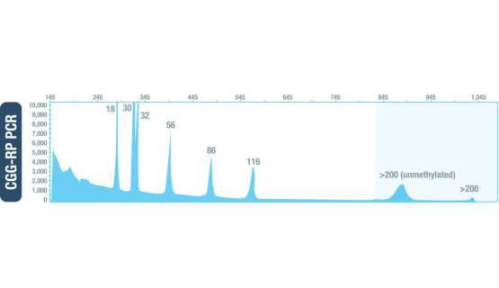 Resultado del control Amplidex PCR FMR1