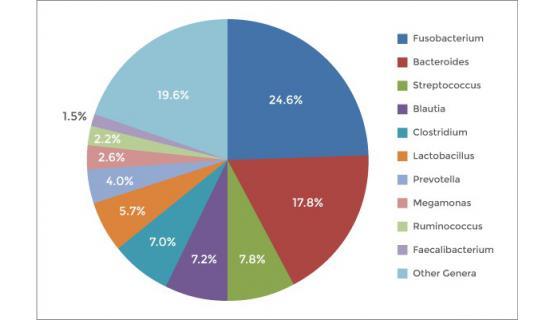 Porcentaje de las bacteria que se obtienen en los análisis