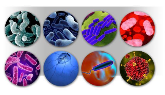 Detección simultánea de virus, bacteris, toxinas y parásitos